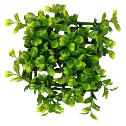 Boxwood Plant Mat [5 in. X 5 in.] - LAST ONE! 2