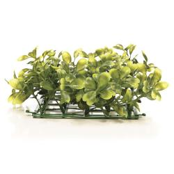 Boxwood Plant Mat [5 in. X 5 in.] - LAST ONE! 3