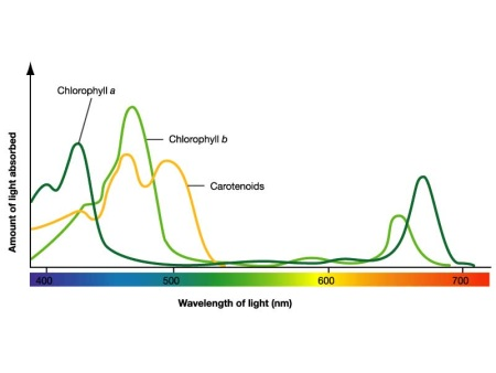 Chlorophyll Color Chart
